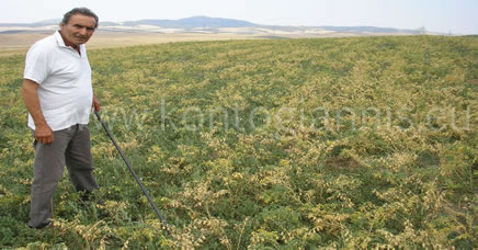 Weed Removal (weeding)
