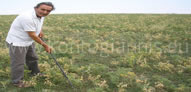 Απομάκρυνση Ζιζανίων (Βοτάνισμα)